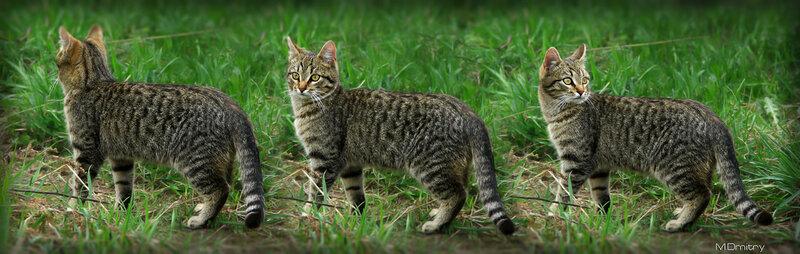 Кошки & Коты(2011)