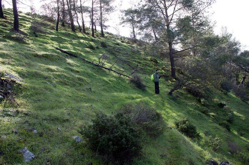 лес в горах на Кипре