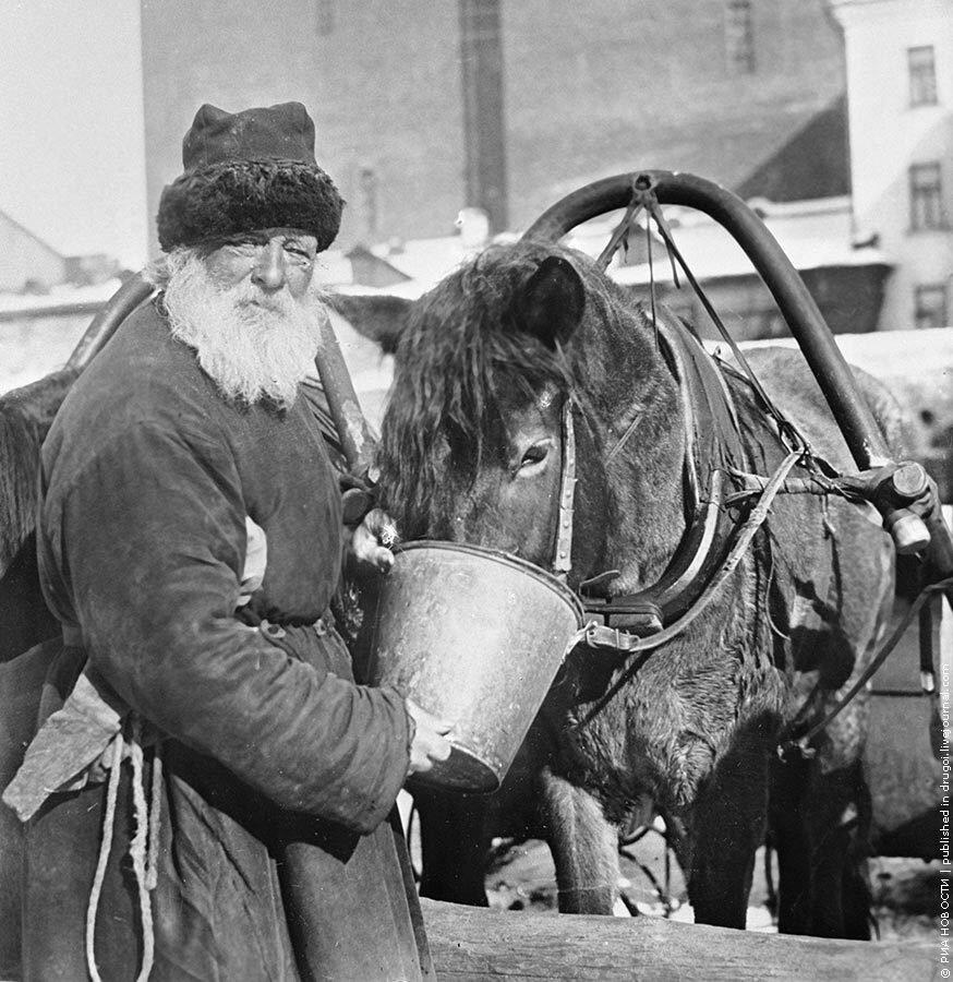 113. 01.02.1924 Извозчик поит лошадь из ведра.