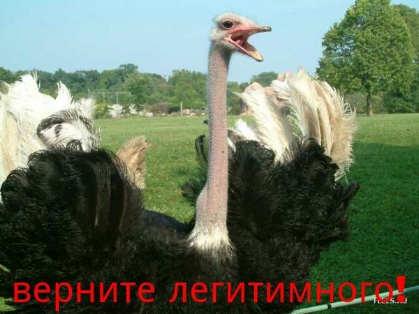 https://img-fotki.yandex.ru/get/16117/163146787.49e/0_159b4b_22f1b9e5_orig.jpg