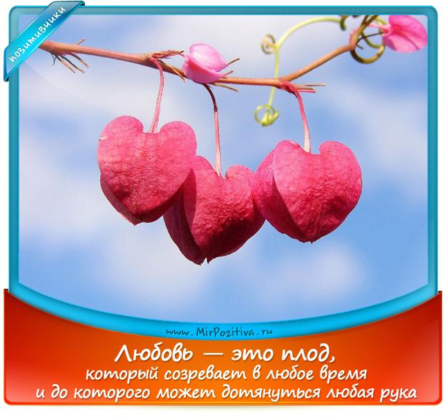 позитивчики лета: Любовь — это плод, который созревает в любое время и до которого может дотянуться любая рука