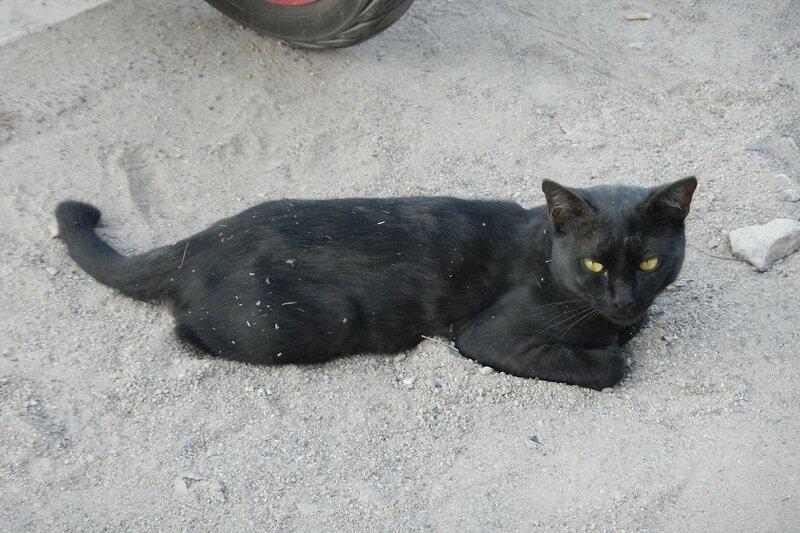 Чёрный кот в Ао Нанге