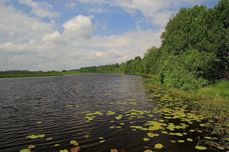 Красоты Чёрного озера: тёмная вода с листьями кувшинок и облака на голубом небе