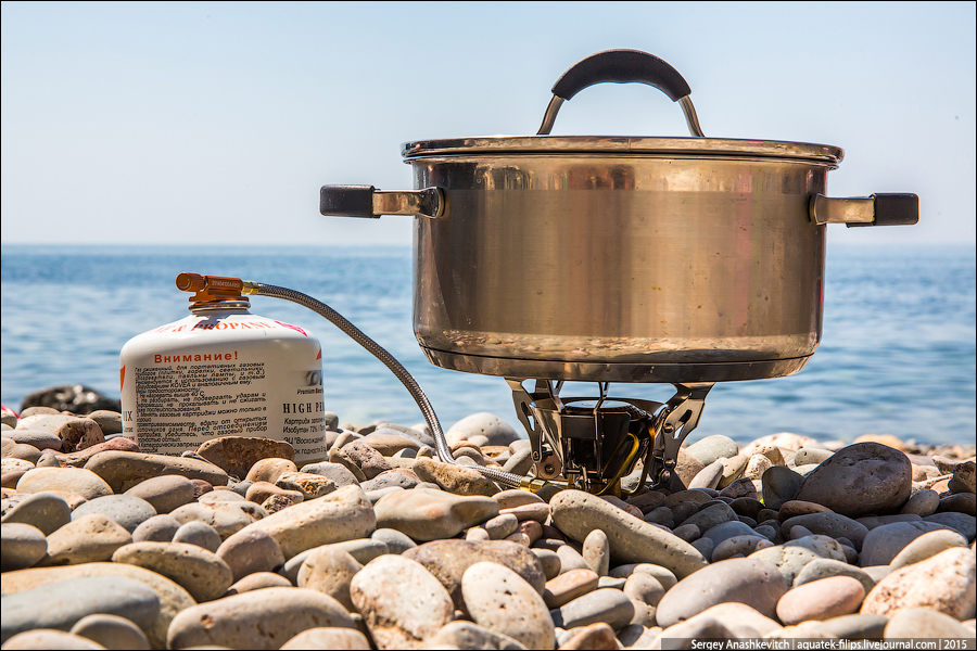 Мидии на берегу моря