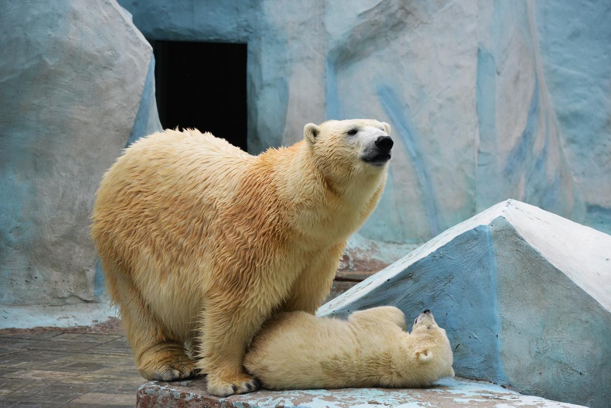 Новосибирский зоопарк.