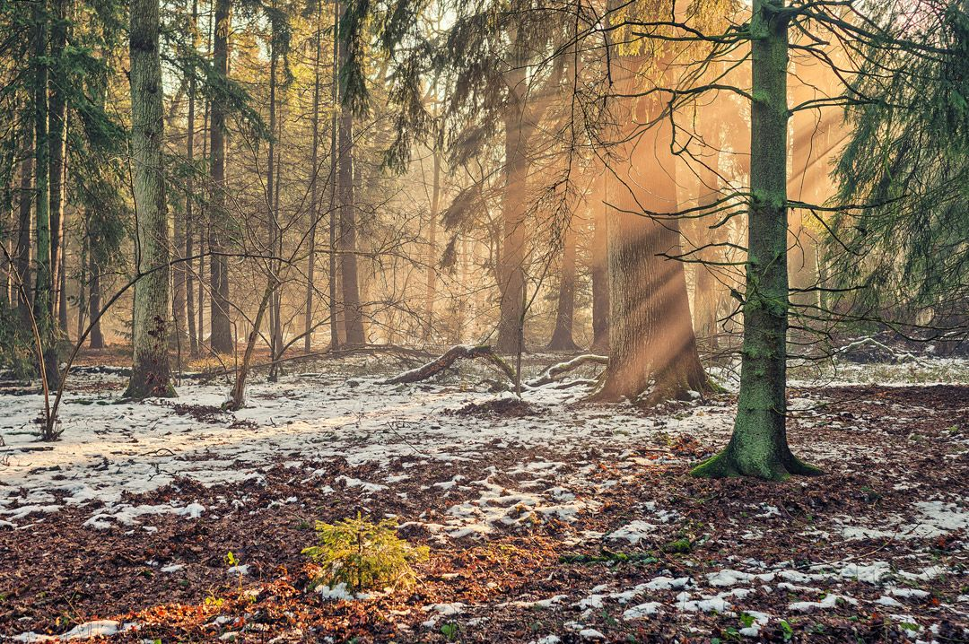 Эстетика природы от Matthias Haker