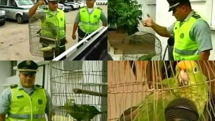 10 историй о животных преступниках