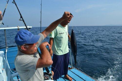 Тунец, морской троллинг
