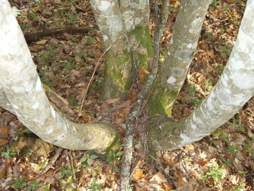 12 октября 2008, под Горячим Ключом, в лесу (105).JPG