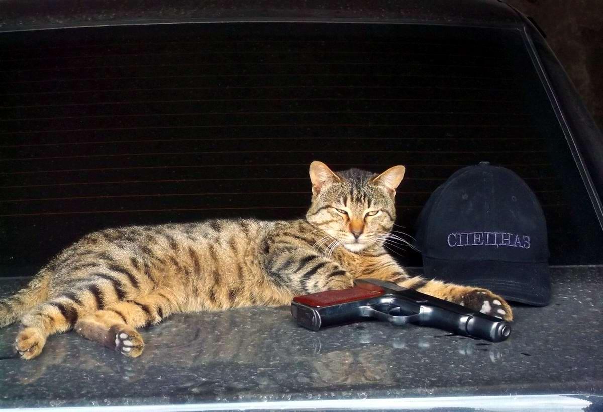 Кот из спецназа