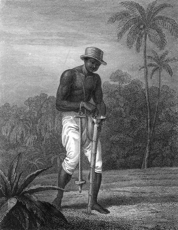 Раб занимается посадкой семян хлопка (Суринам, 1807 год)