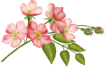 flower_17.png