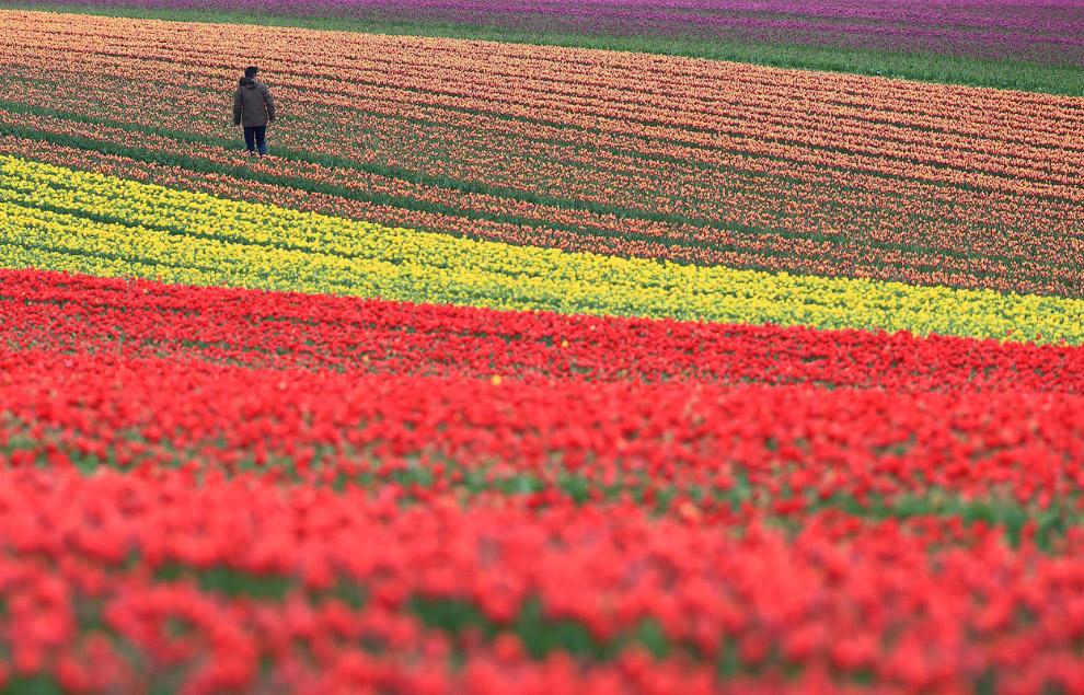 Цветы на фоне собора Святого Павла в Лондоне, 15 апреля 2014. (Фото Leon Neal   AFP   Getty Ima