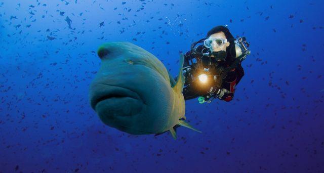 Что можно увидеть под водой