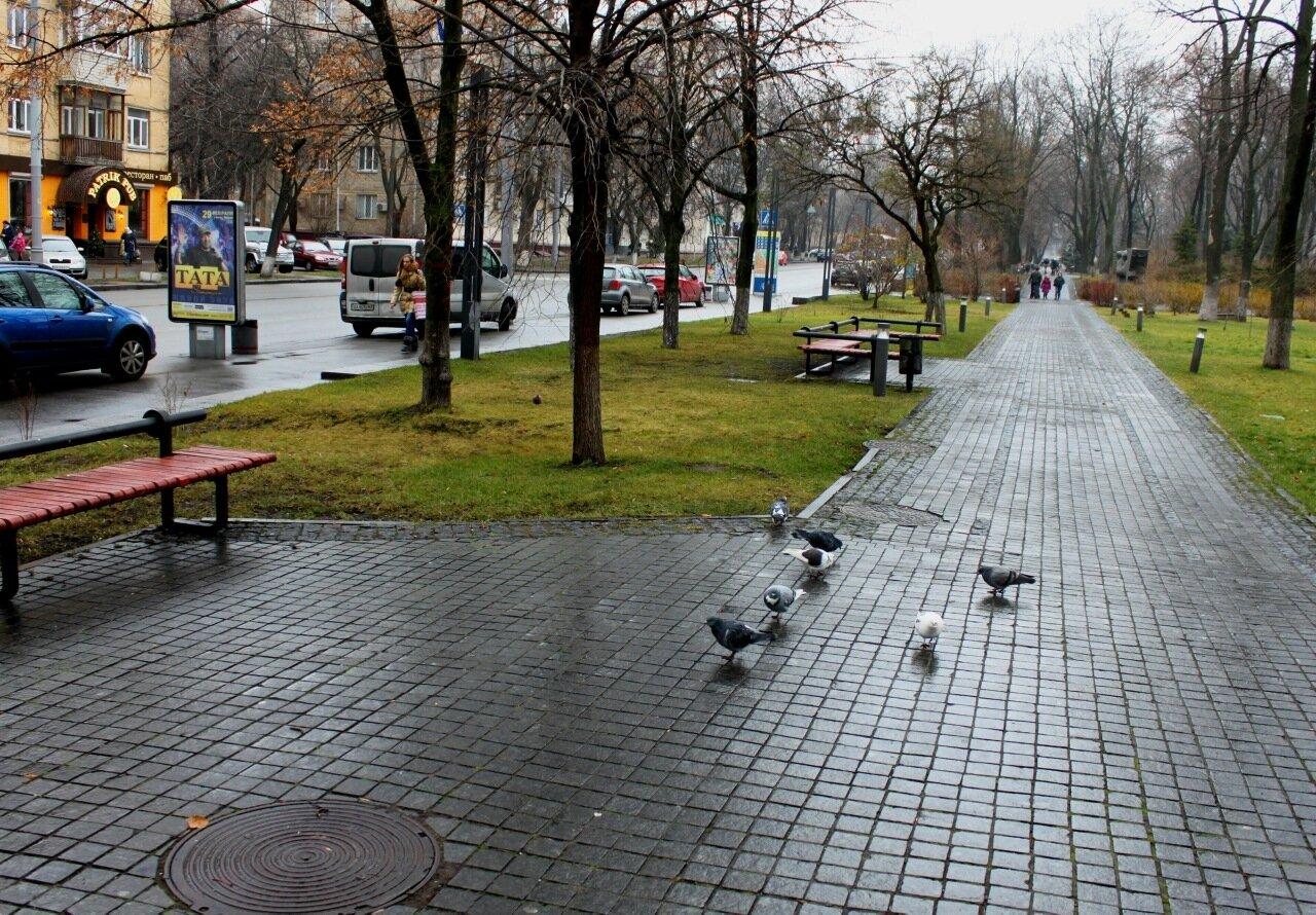 Аллея парка Вечной Славы