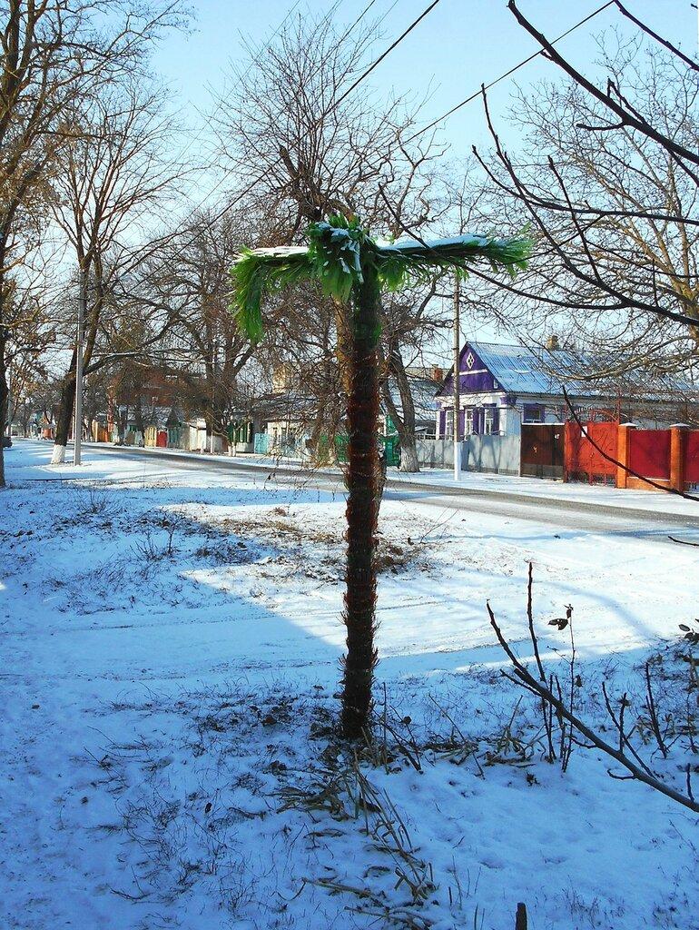 В снежные времена ... DSCN3118.JPG