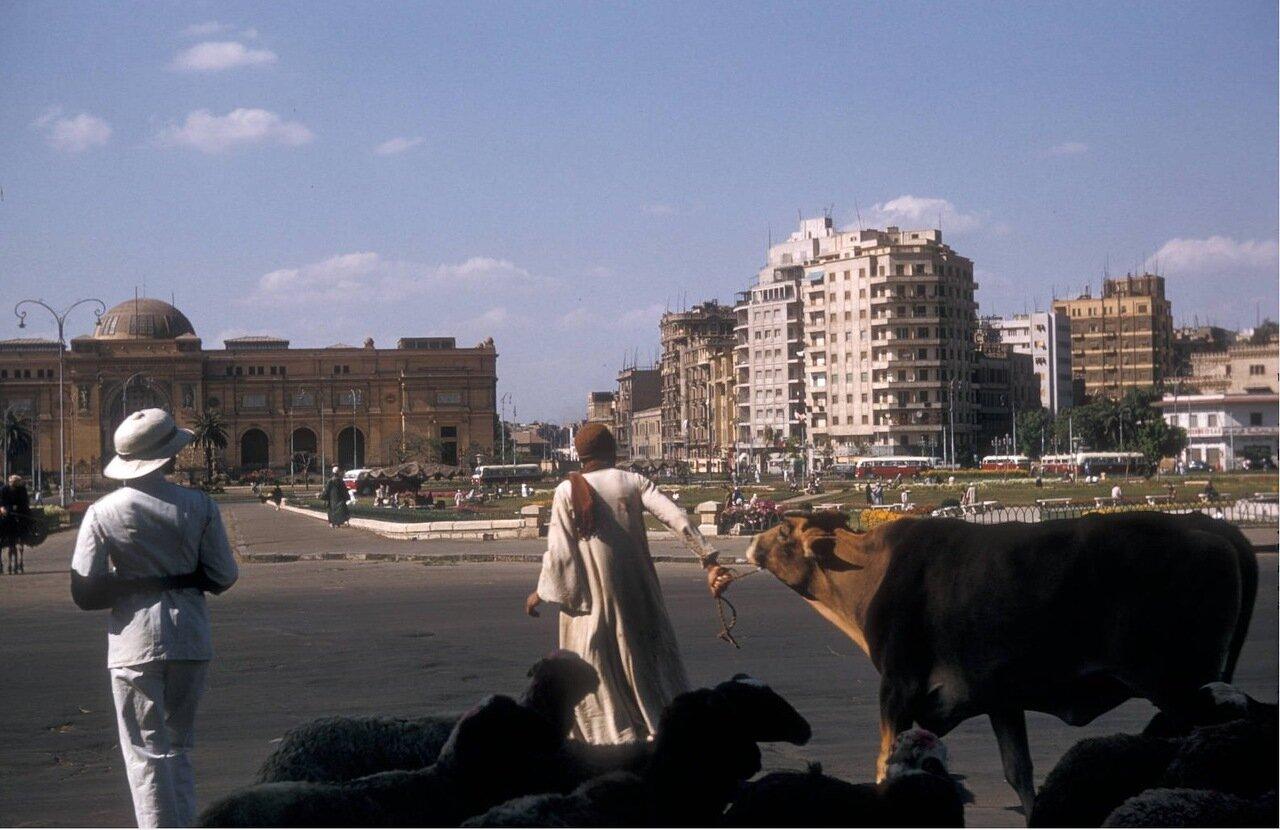 Человек с животными на площади у Египетского музея