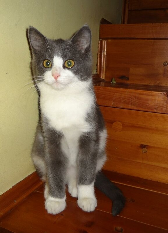 Кому коты? 0_15cee6_125e1d86_XL