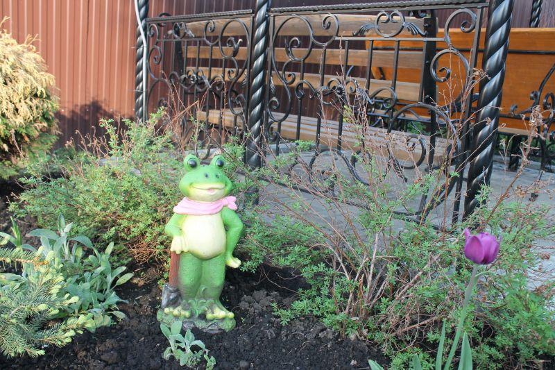 Ну и какой же пруд обойдется без очаровательной лягушки? Эта красавица живет на клумбе рядом с искусственным водоемом. (09.06.2015)