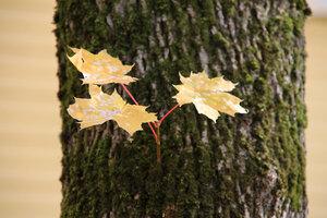 Осень золотая_3. Осенняя природа_3.