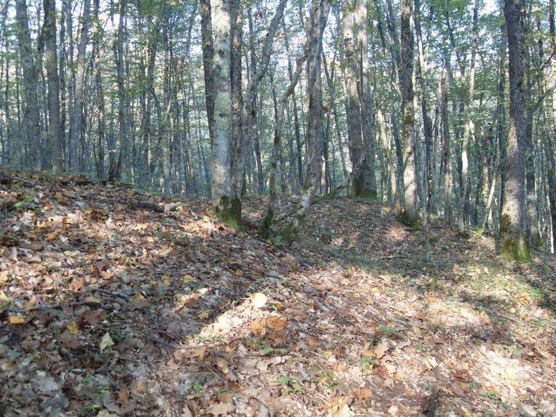 12 октября 2008, под Горячим Ключом, лес (107).JPG