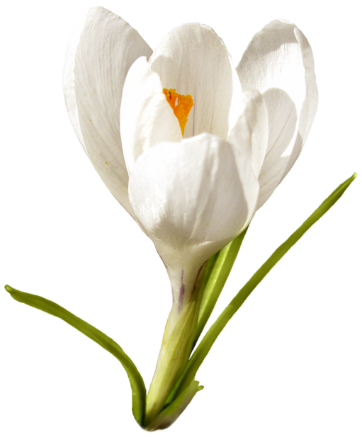 RR_EasterBlessings_Element (54).png