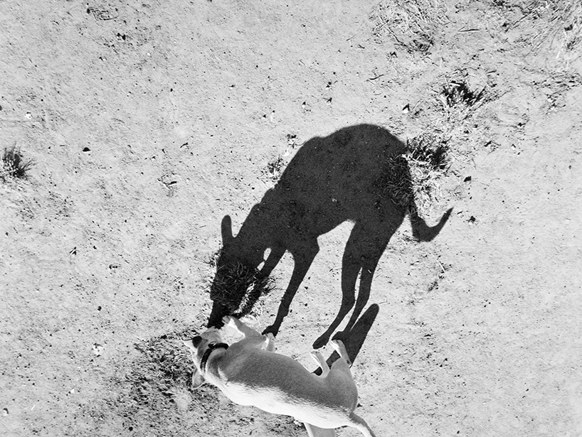 Mondo cane, Thomas Roma6_1280.jpg