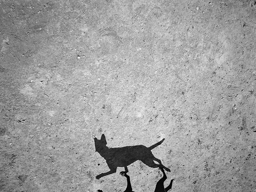 Mondo cane, Thomas Roma80.jpg