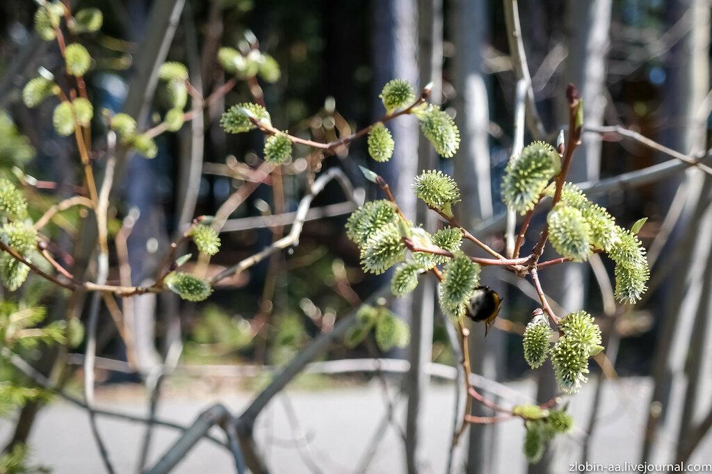 Весна в Югре