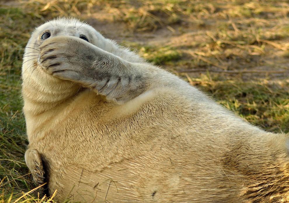 7. «Неужели это был я?» (Фото Yuzuru Masuda | Comedy Wildlife Photography Awards):