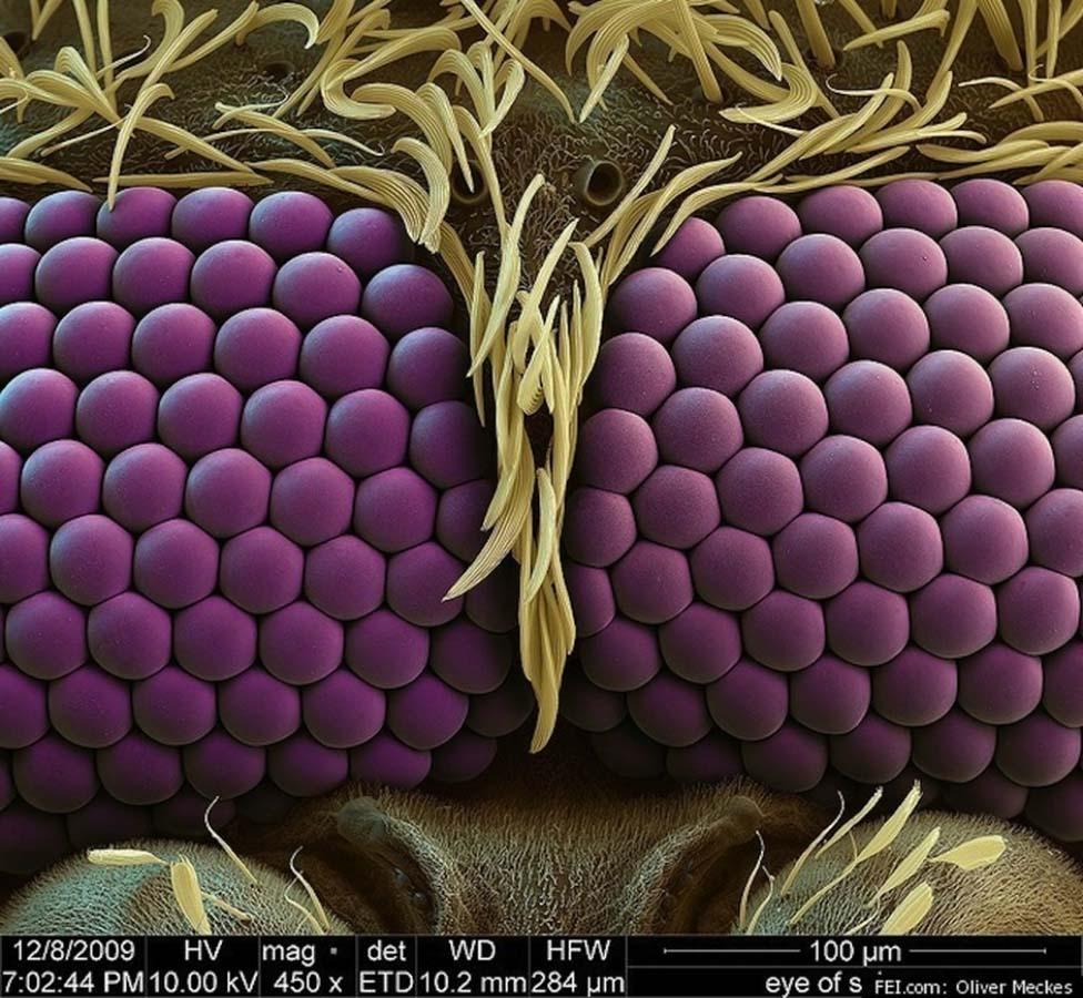 Фото комара на сосках 1 фотография
