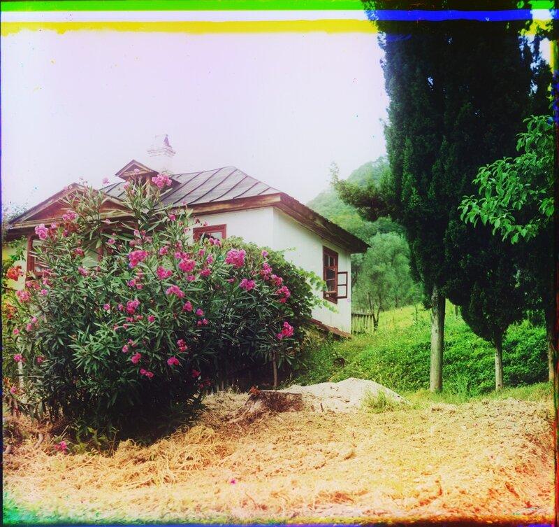 Новый Афон Олеандры в цвету 21539u.JPG