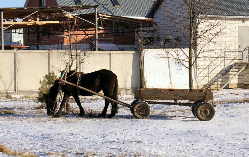 Коняжка у станции Прибор