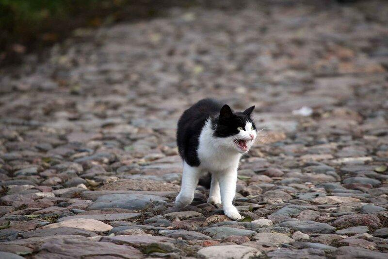 Суздаль - кот
