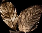 Lilas_btd_leaves1.png