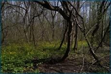 http://img-fotki.yandex.ru/get/16130/15842935.aa/0_cc5e1_12eabe11_orig.jpg