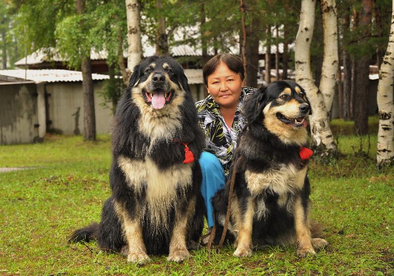 Марика Терегулова и хотошо бурят-монголский волкодав