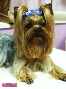 стрижка животных, мода для животных, стрижка собак, одежда для собак и кошек