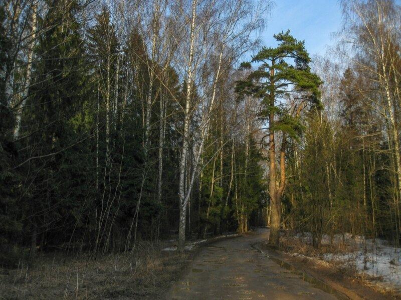 Дорога в Поседкино