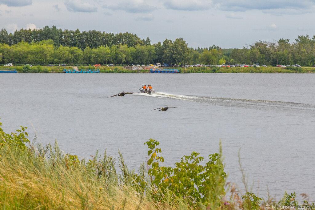 Голуби и катер, канал имени Москвы