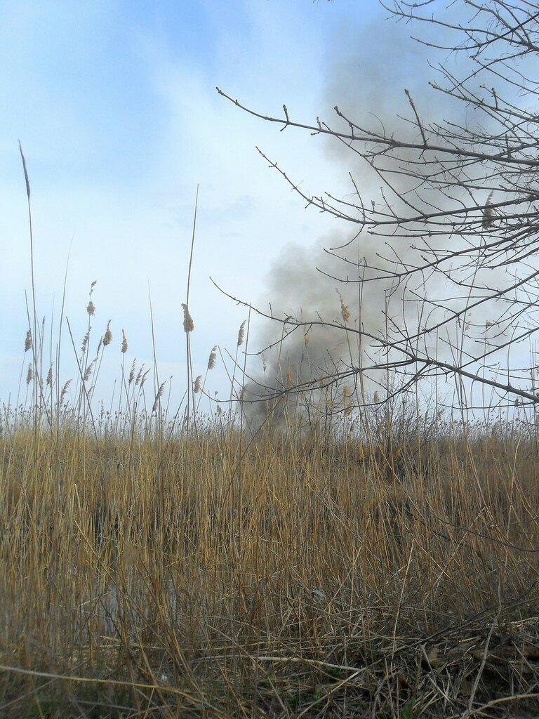 Дым за камышами ... SAM_5921.JPG