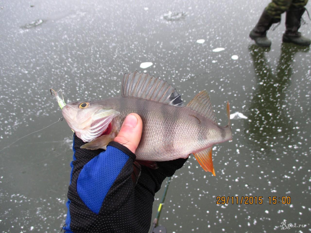 рыбалка на лаи