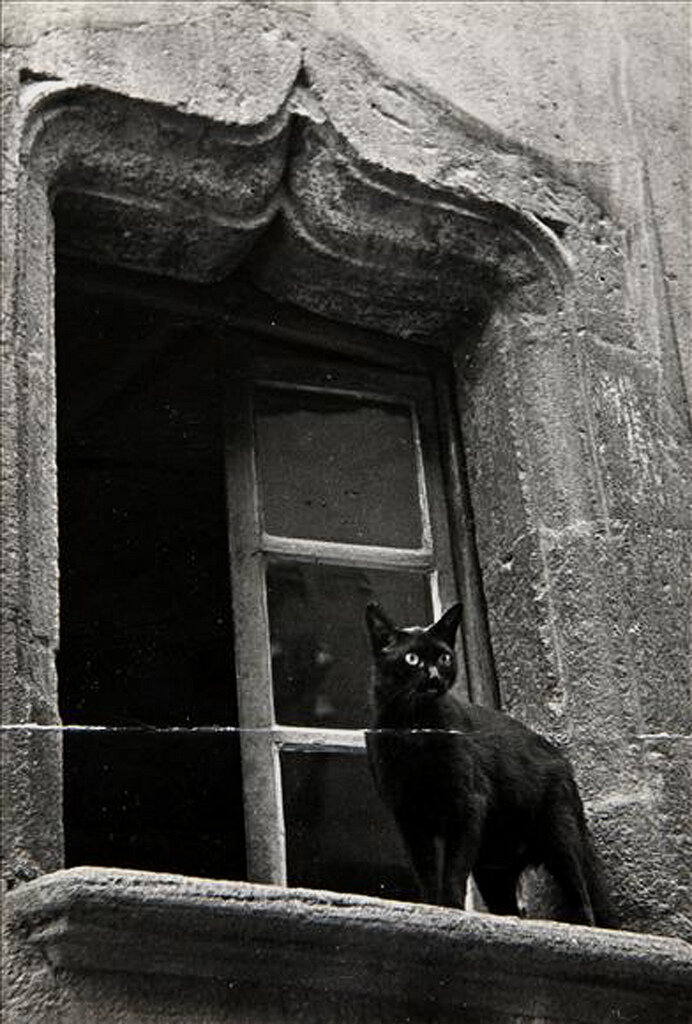 1945. Черный кот на окне