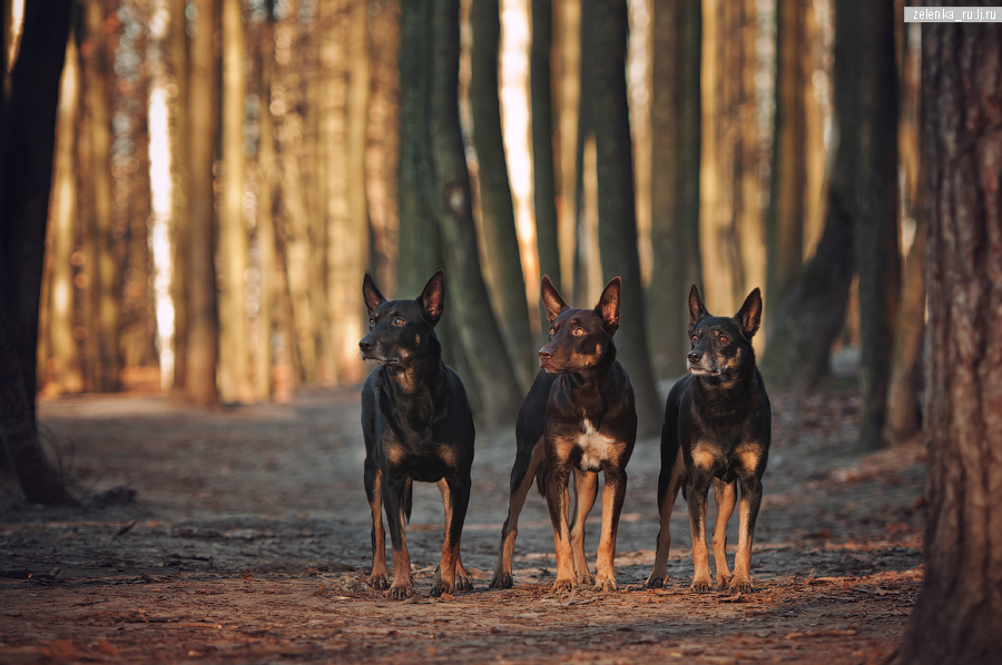 пофотографирую Ваших собак! - Страница 5 0_166524_4254099e_orig