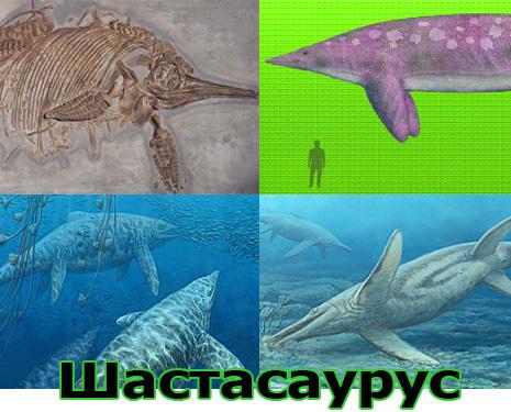 Самые большие животные в мире, существовавшие на земле (фото 10)