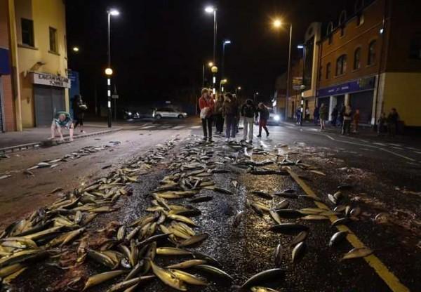 рыба раскидана на дороге скумбрия
