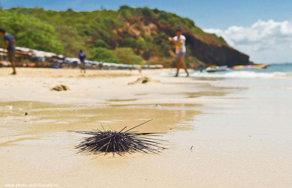 10. Морской еж на пляже Nual Beach на острове Ко Лан. Поездка в Таиланд в курорт Паттайя.