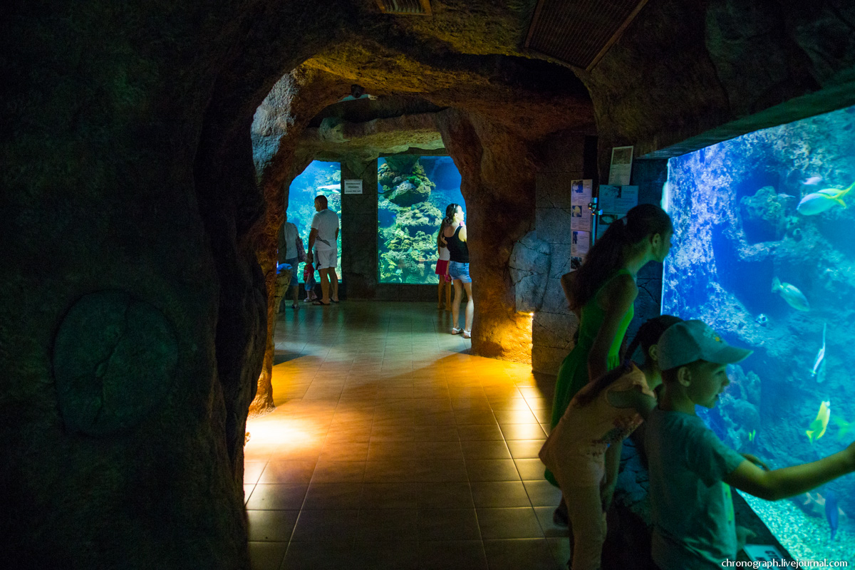 океанариум в лазаревском картинки она выходит подъезд