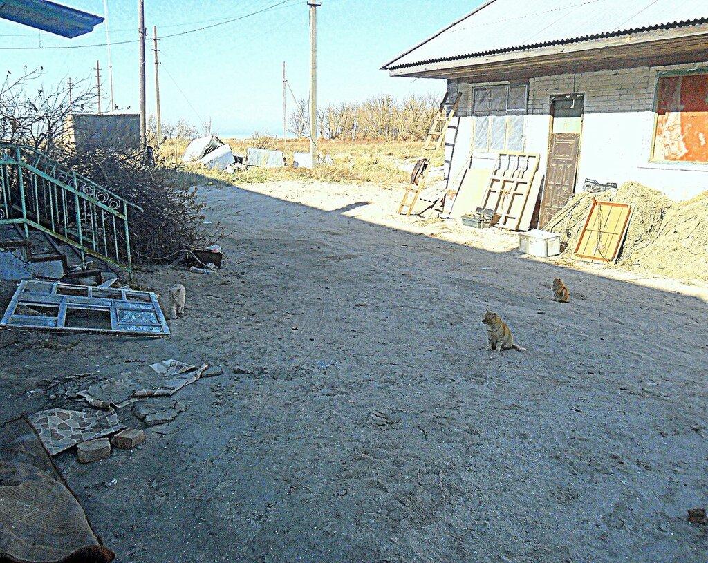 Кошачья свобода ... SAM_4582.JPG