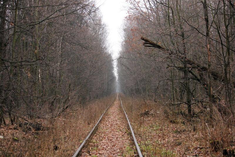 Древесный коридор